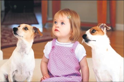 Evlerde Evcil Hayvan Beslemek Yasak Değil!