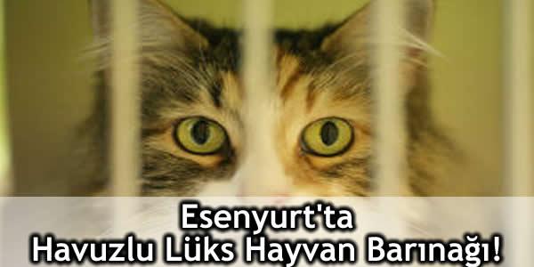 Esenyurt'ta Havuzlu Lüks Hayvan Barınağı!