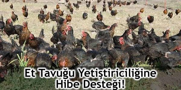 Et Tavuğu Yetiştiriciliğine Hibe Desteği!