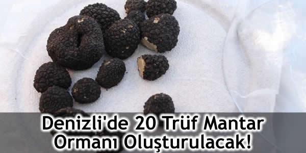 Denizli'de 20 Trüf Mantar Ormanı Oluşturulacak!