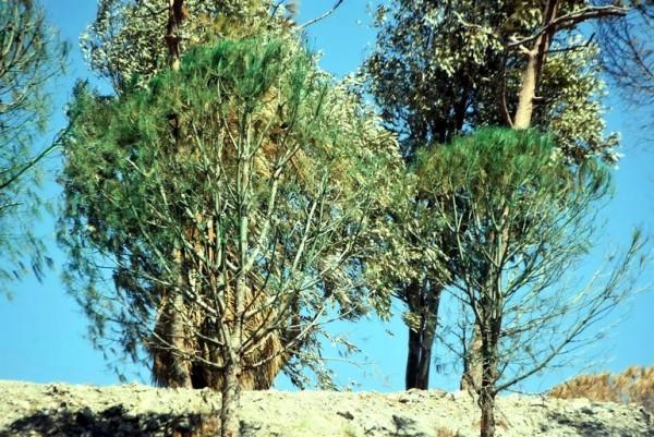 İnşaat Firması, Kuruyan Ağaçları Yeşile Boyadı