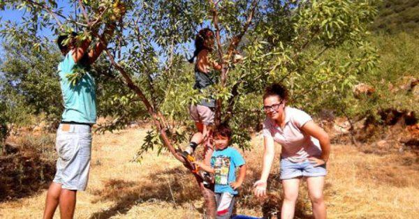 Buğday Derneğin'den Ücretsiz Ekolojik tatil