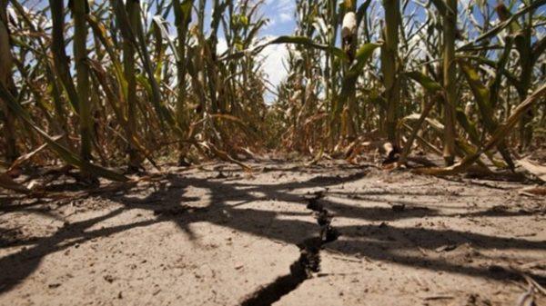 Büyük Ova Projesiyle Tarım Arazileri Kurtarılıyor!