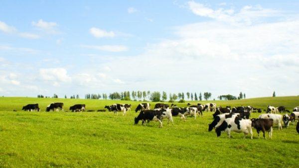 Hayvan Üretimi Yetersiz Kaldı, İthalata 4.4 Milyar Dolar Harcadık